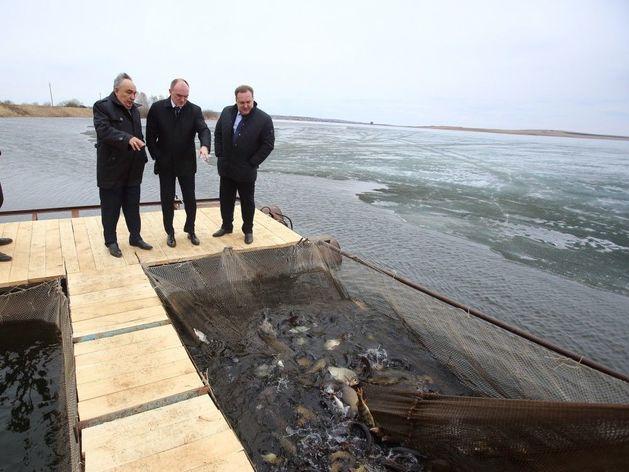 Власти Челябинской области снова взялись за проблемы рыбоводства