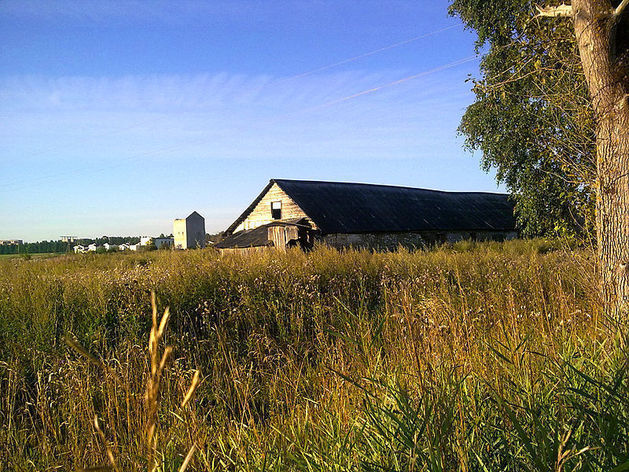 Пять семейных ферм получили гранты от Минсельхоза Челябинской области