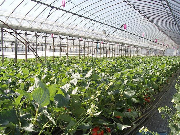 Челябинская область не выделила квоты для китайцев в с/х: овощи могут подорожать