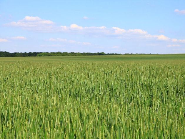 Совхозу на месте Томинского ГОКа - не бывать: решение экспертной комиссии
