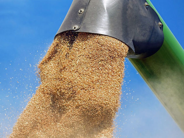 Зерно от фермеров Челябинской области не проходит проверку на элеваторах