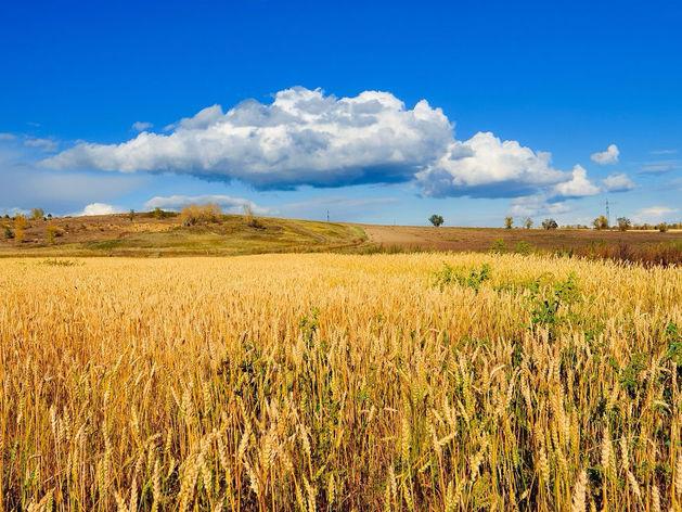 Челябинский Минсельхоз требует от «Южуралзолота» продать 15 земельных участков