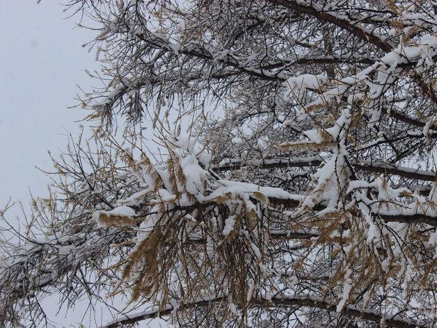 В Челябинске спрогнозировали похолодание до -27 градусов
