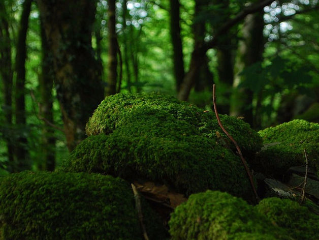 Челябинский экологический фонд признали иностранным агентом