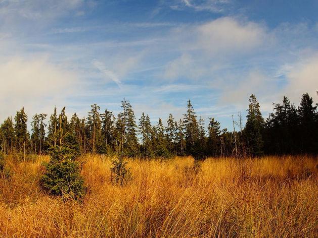 В Челябинской области появится особо охраняемый национальный парк