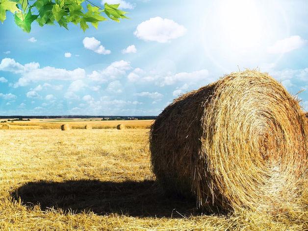 Количество сельхозорганизаций сократилось на Южном Урале на 41%