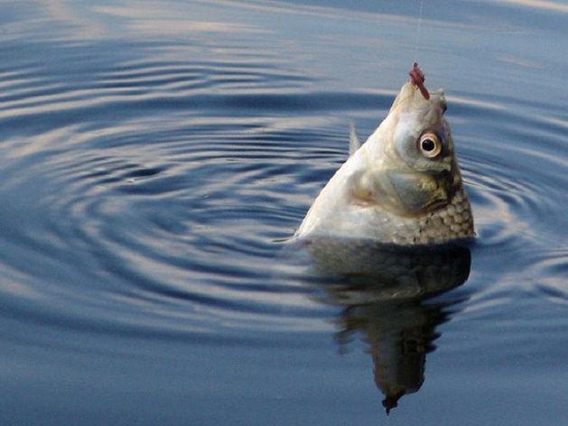 Челябинский депутат продает крупное рыбопромышленное предприятие за 320 млн руб.