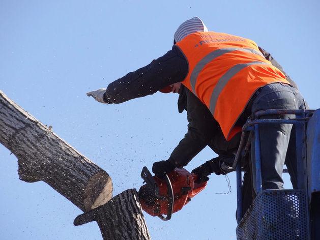 В центре Челябинска вырубили деревья и построят офис
