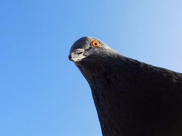 Количество «голубей» среди челябинцев достигло 37%