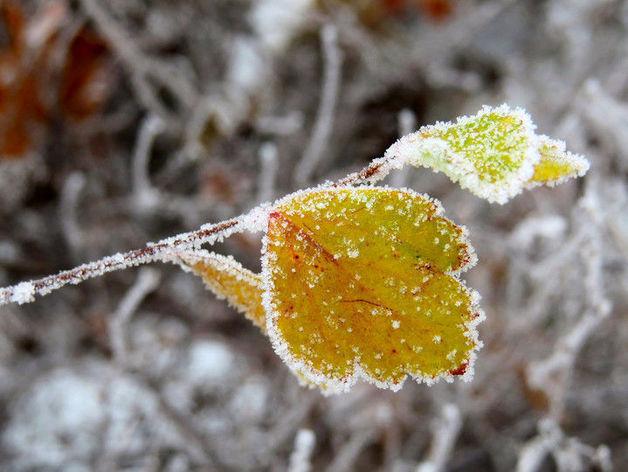 По Челябинской области скоро ударят морозы. ПРОГНОЗ