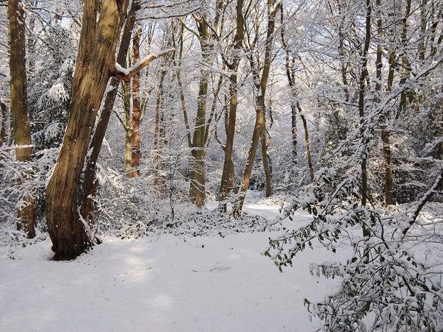 В Челябинске ожидается снег, дождь и сильный ветер