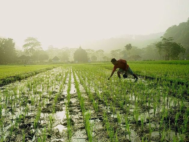 «Огородный туризм». Японцев приглашают арендовать землю на Южном Урале