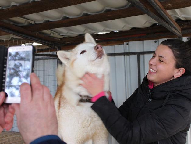 Твое собачье дело: как живет «звериный» бизнес в Челябинской области