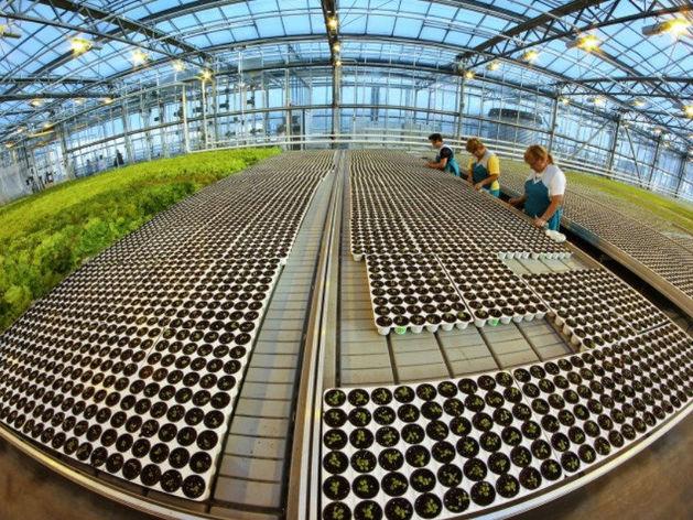 Агрокомплекс «Чурилово» судится с пермскими предпринимателями из-за 4 млрд руб.