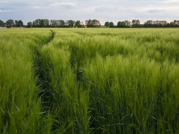 «Очень активное направление». Где в Челябинске продается самый дорогой земельный участок