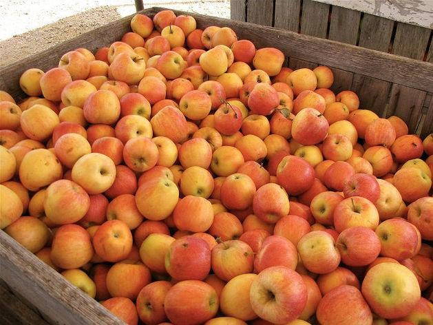 «Яблоки на 16 млн руб. гниют на границе». Челябинскую компанию возмутило поведение таможни