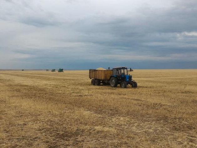 «Это шанс для фермеров, но продукты подорожают». Как урожай Южного Урала повлияет на рынок