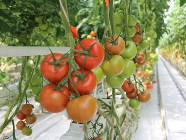 Крупнейшая овощная компания построит распределительный центр в Челябинске