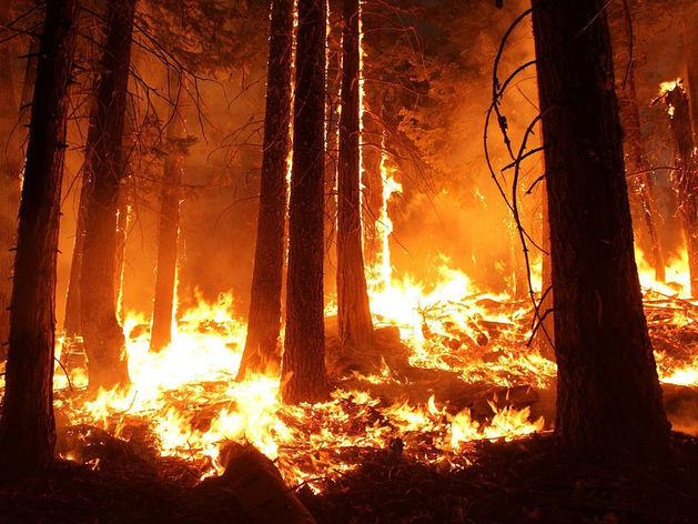 «Ариант» оштрафовали за пожар в лесах Челябинской области