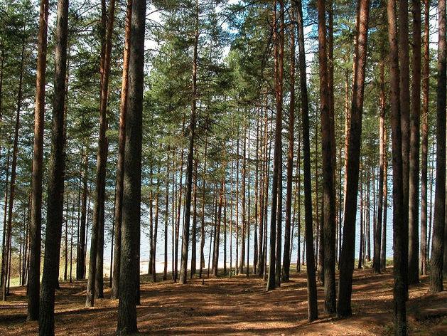 Каштакский бор под Челябинском резко увеличится на сотни гектаров