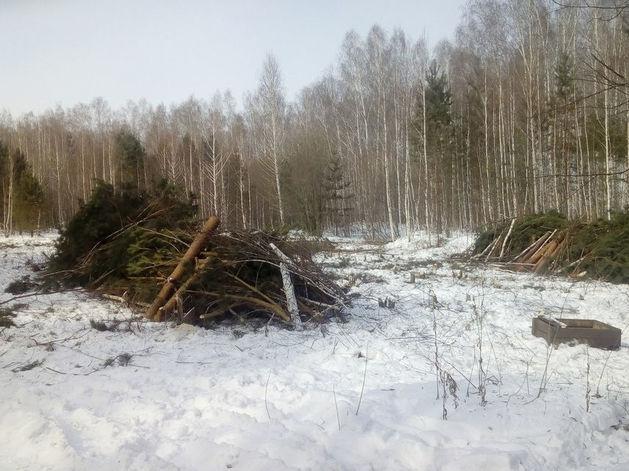 Контракт на 3 млн руб. В Челябинске начали вырубку деревьев на месте будущего экопарка