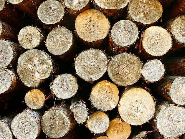 Текслеру рассказали об изменениях границы леса из-за строительства Томинского ГОКа