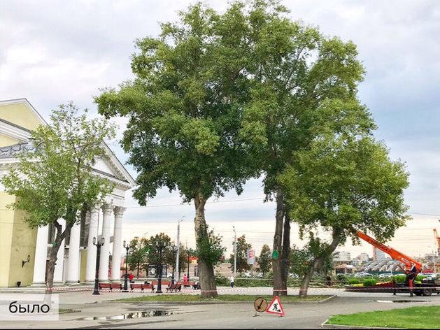 «Освоил бюджет». Спиленные деревья у «Родины» оказались здоровыми