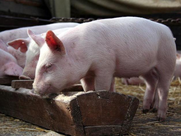 Россельхознадзор Челябинской области предупредил об опасном вирусе среди животных