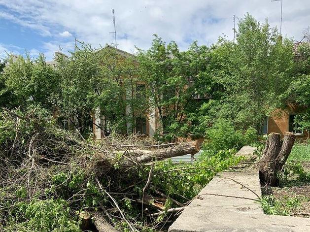 В Челябинске власти разрешили уничтожить здоровые деревья под строительство аптеки
