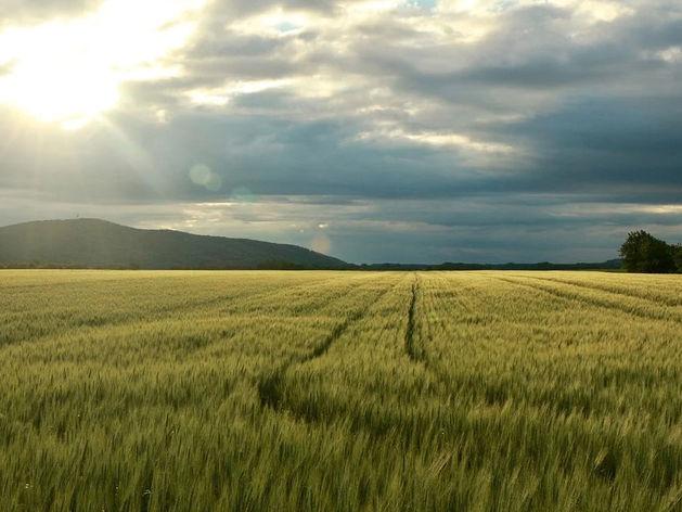 В Челябинской области власти отклонили 60% заявок на снижение кадастровой стоимости земли