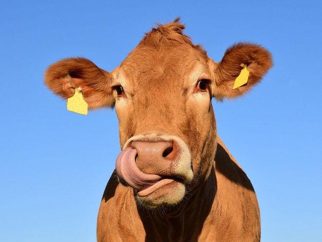 Шесть производителей молока в регионе получат субсидии