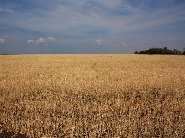 В Челябинской области из-за засухи объявят ЧС