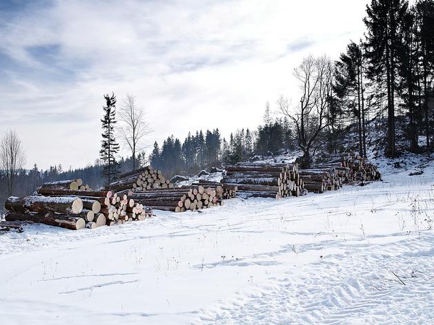 В Челябинской области за незаконную рубку деревьев грозит штраф до 300 тыс. руб.