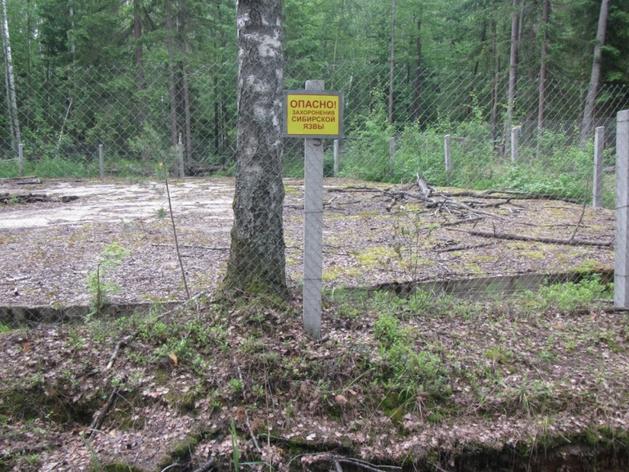 Власти рассказали, что будут делать с заброшенным скотомогильниками в Челябинской области
