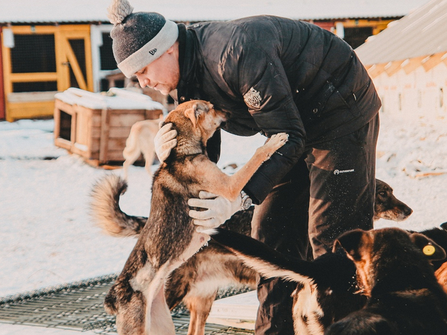 К отлову и содержанию бездомных животных в Челябинске привлекли зоозащитников