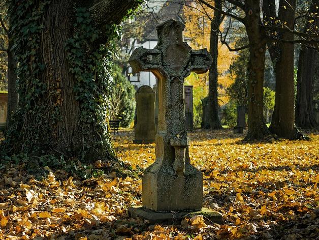 Кладбище в бору вне закона: мэрия получила предписание от Роспотребнадзора