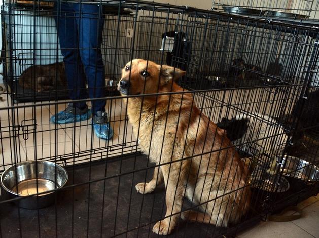 На бездомных животных выделено более 60 млн руб. из бюджета Челябинской области