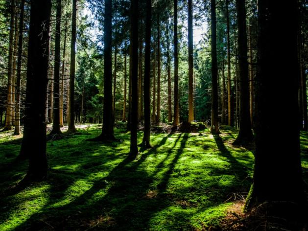 Объем инвестиций на охрану окружающей среды в Челябинской области вырос на 171%