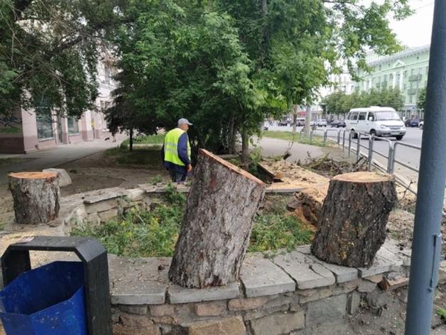 Посадки за вырубки: виновным в сносе даурской лиственницы в Челябинске грозит уголовка