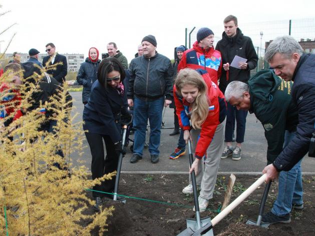 В парке на ЧТЗ посадили даурские лиственницы